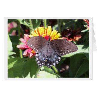 Spicebush Swallowtail Card
