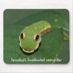 Spicebush Swallowtail caterpillar Mouse Pads