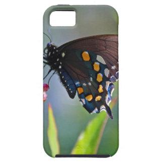 Spicebush Swallowtail II iPhone SE/5/5s Case