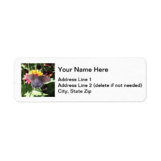 Spicebush Swallowtail Label