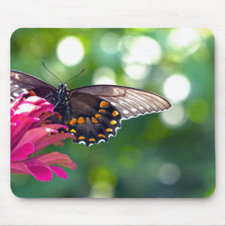 Spicebush Swallowtail Mouse Pad