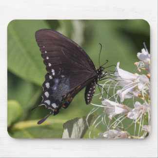 Spicebush Swallowtail Mouse Pad