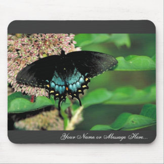 Spicebush swallowtail on Common milkweed Mouse Pad