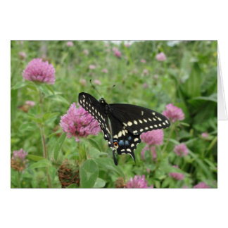 Spicebush Swallowtail On Red Clover Card