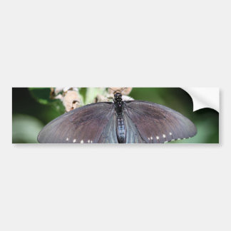 Spicebush Swallowtail Papilio Troilus Bumper Sticker