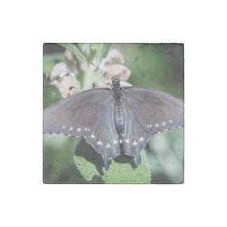 Spicebush Swallowtail Papilio Troilus Imán De Piedra