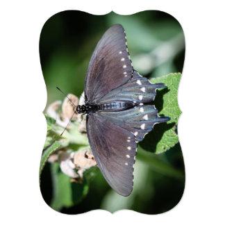 "Spicebush Swallowtail Papilio Troilus Invitación 5"" X 7"""