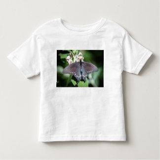 Spicebush Swallowtail Papilio Troilus Playeras