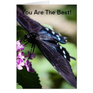 Spicebush Swallowtail Papilio Troilus Tarjeta De Felicitación