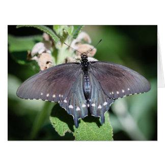 Spicebush Swallowtail Papilio Troilus Tarjeta De Felicitación Grande