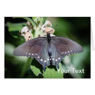 Spicebush Swallowtail Papilio Troilus Tarjeta Pequeña