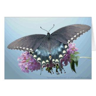Spicebush Swallowtail Photo Card