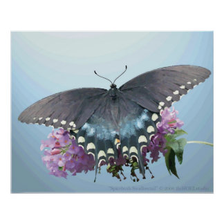 Spicebush Swallowtail Photo Poster
