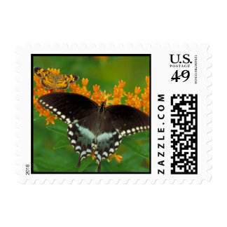 Spicebush Swallowtail Postage