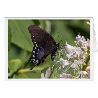 Spicebush Swallowtail Tarjeta De Felicitación