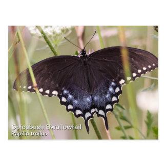 Spicebush Swallowtail Postal