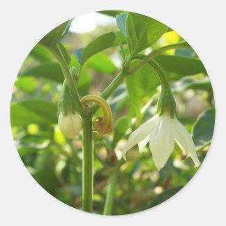spicy blooms classic round sticker