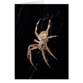 Spider 0361 - Vertical Card