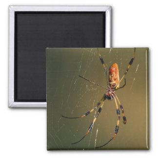 spider 2 inch square magnet