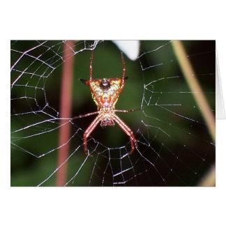 Spider 6482 card