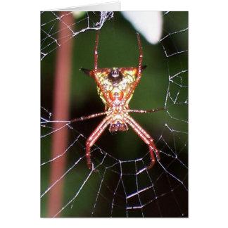 Spider 6482- Vertical Card