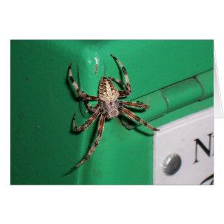 Spider 7704 card