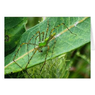 Spider 8792 card