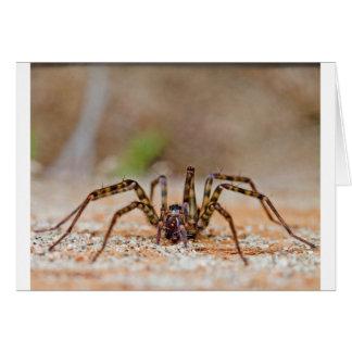 spider a card