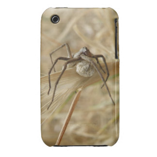 Spider and Egg Sac iPhone 3 Case