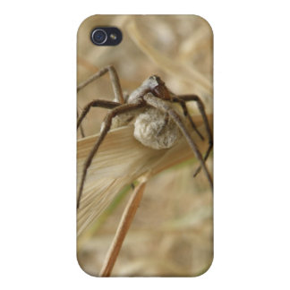 Spider and Egg Sac  iPhone 4/4S Cases