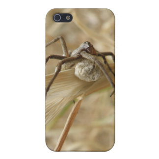 Spider and Egg Sac  iPhone SE/5/5s Cover