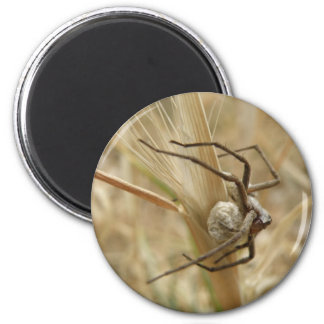 Spider and Egg Sac Magnet