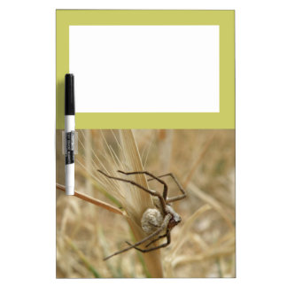 Spider and Egg Sac Memo Board