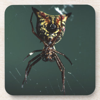 spider and web drink coaster