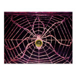 SPIDER AND WEB  Grey Agate Black Postcard