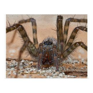 spider b postcard