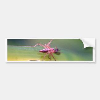 spider bumper sticker