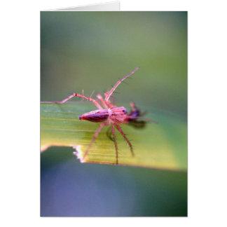 spider cards
