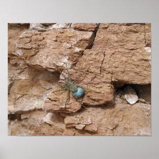 Spider, carrying blue egg sac, sandstone rock-face poster