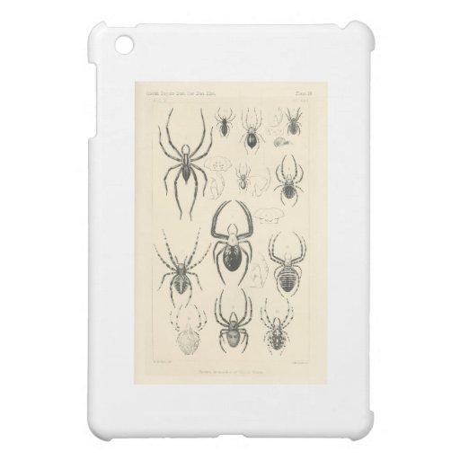 spider-clip-art-4