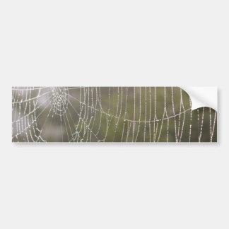 Spider Cobweb Bumper Sticker