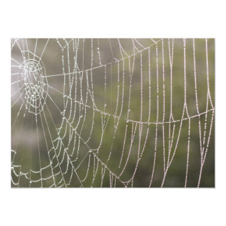 Spider Cobweb Card