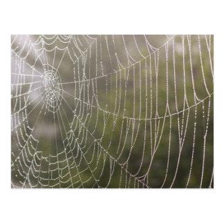 Spider Cobweb Postcard