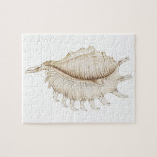 Spider Conch Shell in Colour Pencil Jigsaw Puzzle