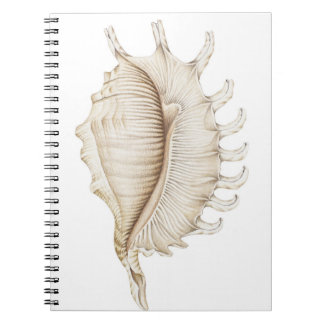 Spider Conch Shell in Coloured Pencil  Notebook