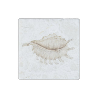 Spider Conch Shell in Pencil Marble Stone Magnet