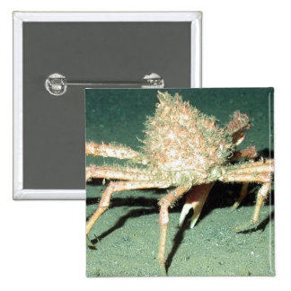 Spider Crab Pinback Buttons