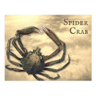 Spider Crab Illustrated Custom All Occasion Postcard