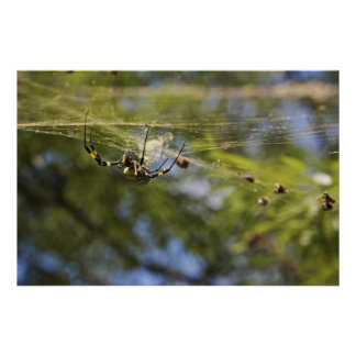 Spider Crawling on a Web Poster