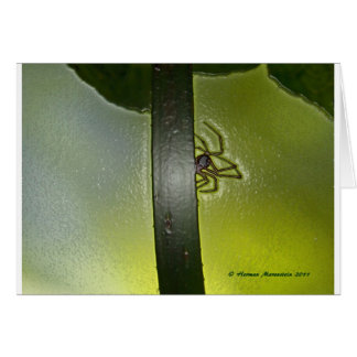 spider d card